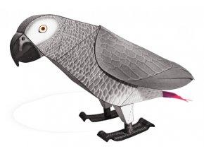 Papoušek šedý - žako (Psittacus erithacus)
