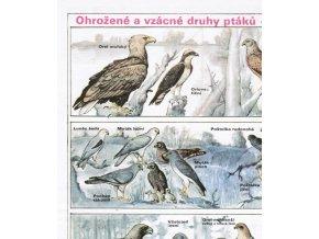 Ohrožené a vzácné druhy ptáků - dravci