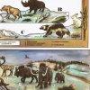Střední Evropa v době ledové - před 25 tisíci let