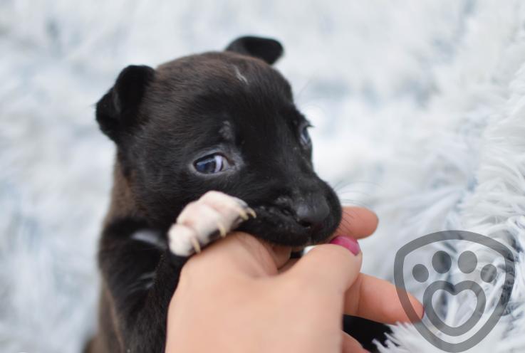 3 věci, které potřebujete vědět před nákupem kočky nebo psa