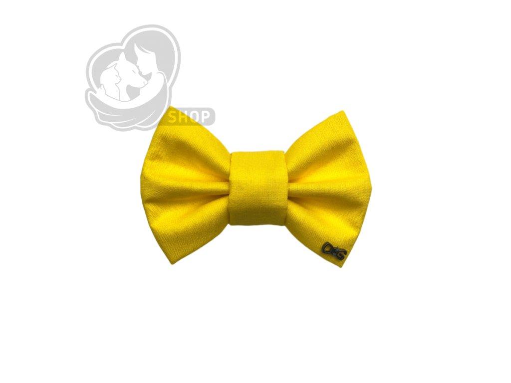 žlutý motýlek3