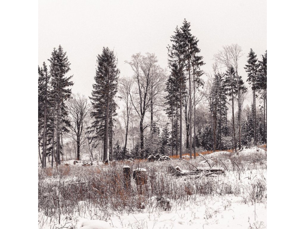FOTOOBRAZ - Ladovská zima