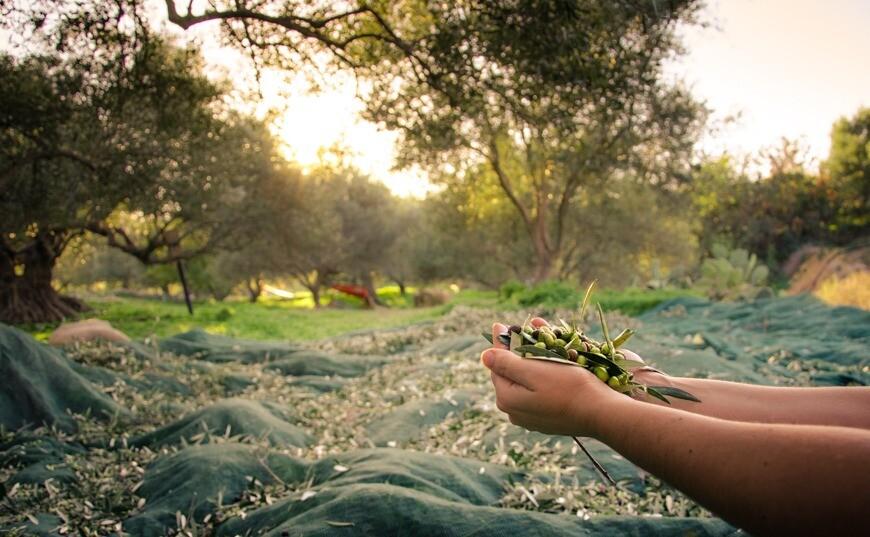 Extra panenský olivový olej - který je nejlepší?