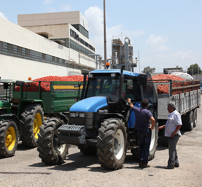 tomatoes-from-local-greek-producers-arrive-at-factory