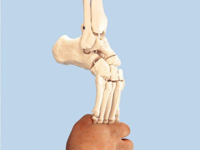 Flexibilní model nohy