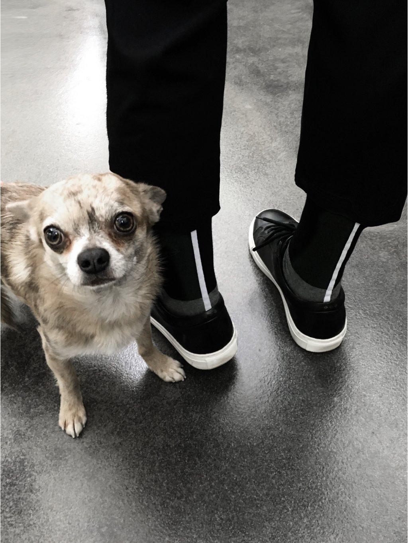 1101 Ponožky