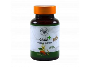 Caga plus chaga inonotus obliquus 1 1