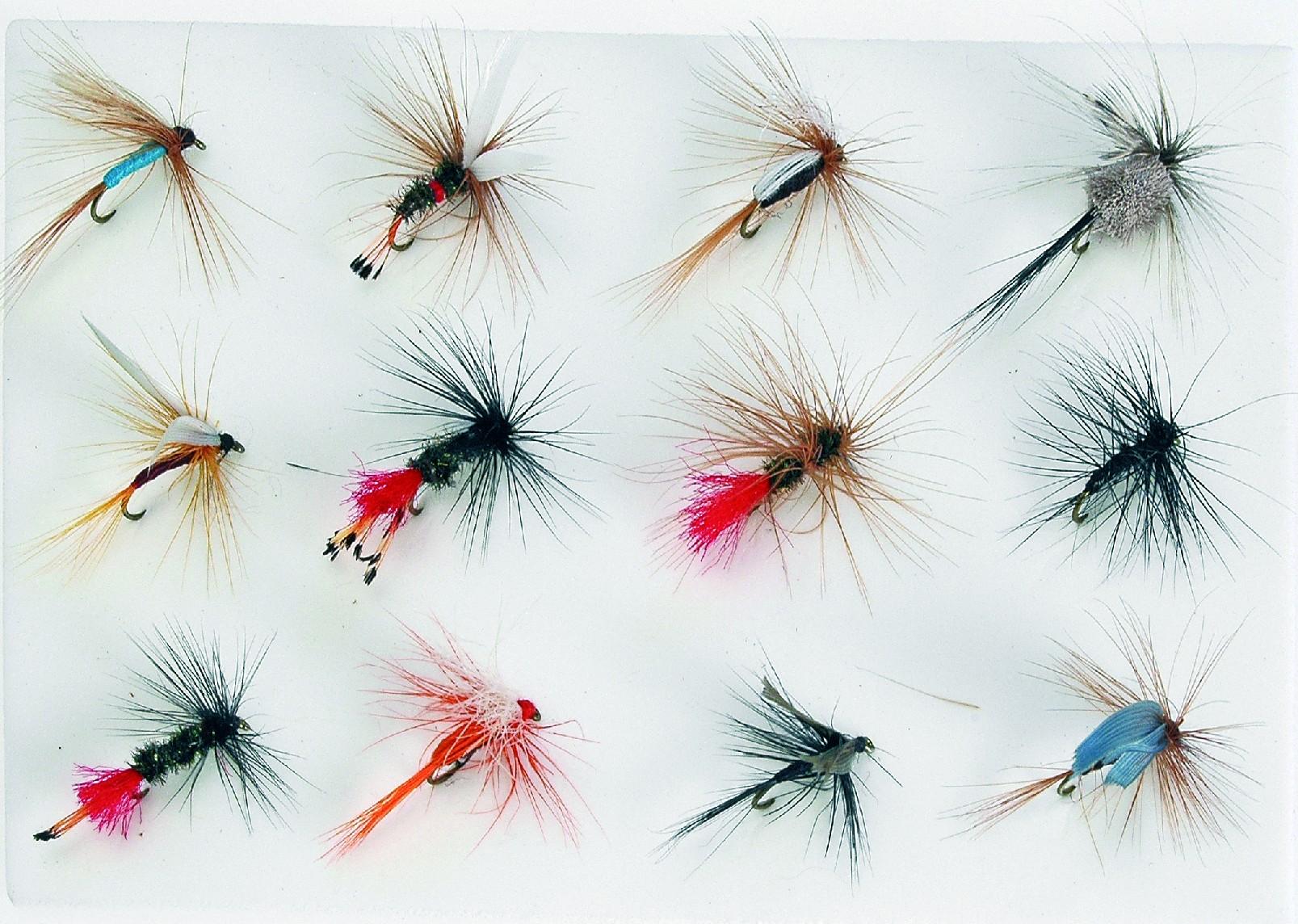 Sady mušek druh: FLY