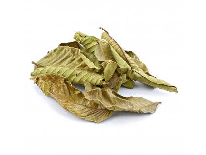 guava leaves 10x