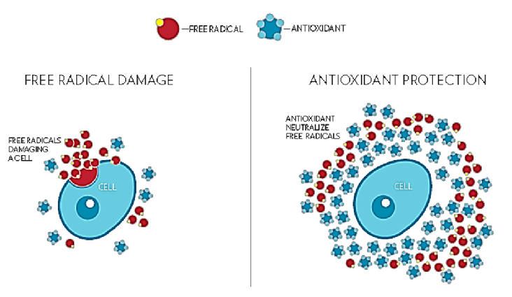 Měření hladiny antioxidantů 17. března 2016