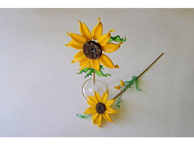 květina slunečnice4