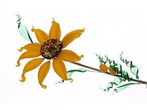 květina slunečnice1
