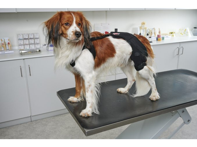 Bandáž Rehab Pro na koleno pro psa KRUUSE S pravá 2
