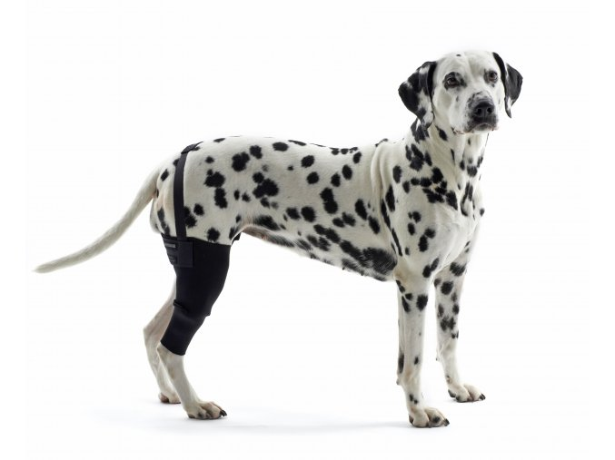 Bandáž Rehab na koleno pro psa KRUUSE 1 na aaagranule