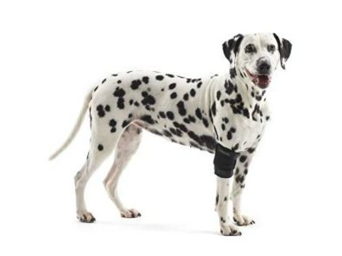 Bandáž Rehab na loket pro psa KRUUSE na aaagranule