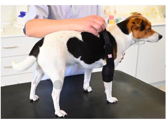 Bandáž Rehab Pro na loket pro psa KRUUSE 2 na aaagranule