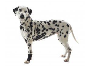 Bandáž Rehab karpální pro psa KRUUSE na aaagranule