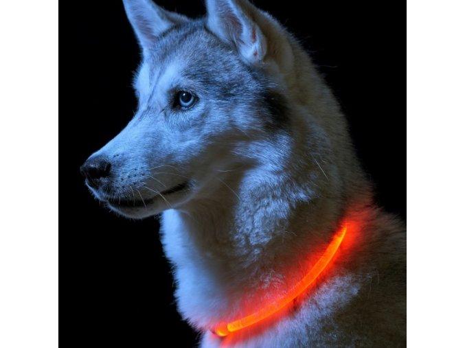 LED svítící obojek/kruh pro psy