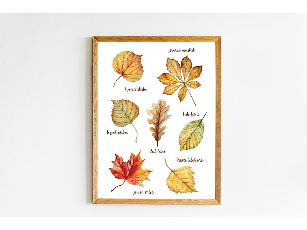 Podzimní listy s popisky