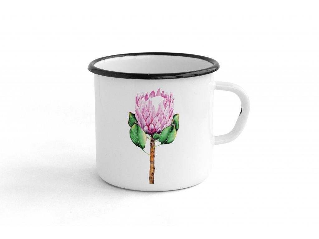 protea růžová
