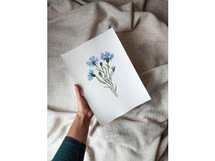 Originál akvarel chrpa modrá A4
