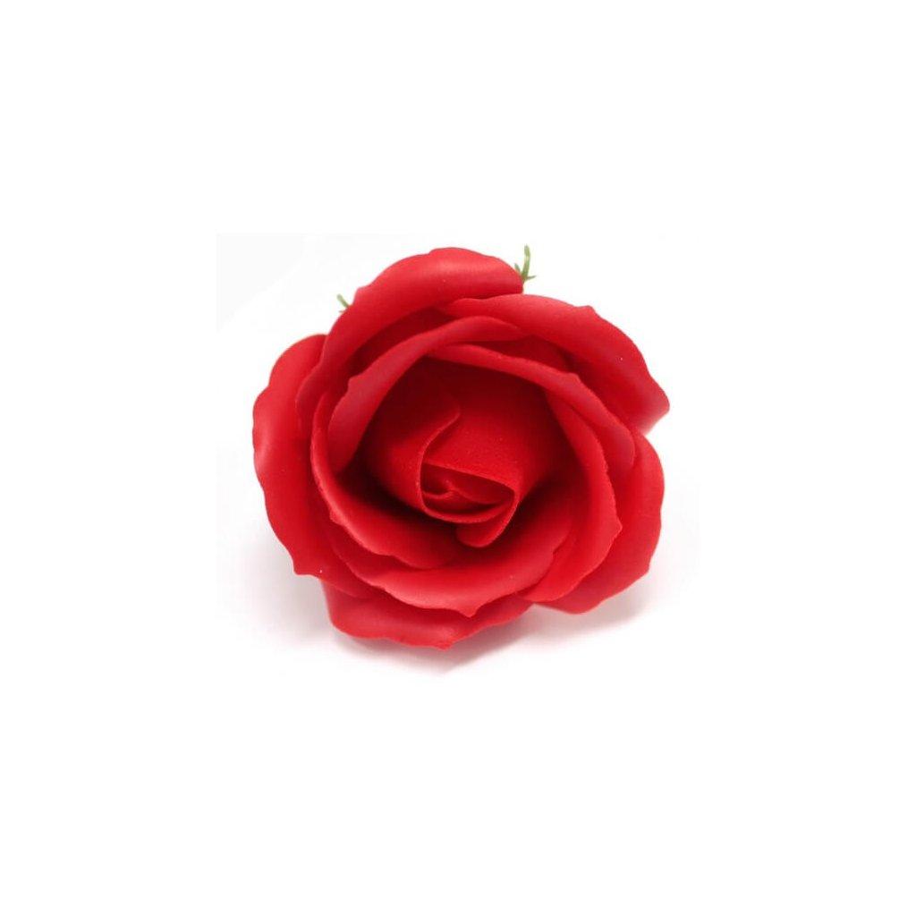 Mydlový kvet ruža, červená