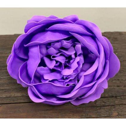Mydlový kvet levandule