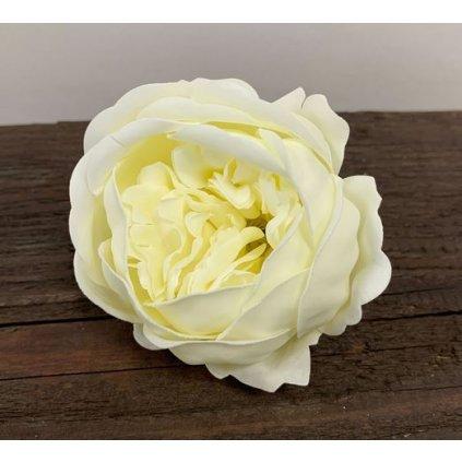 Mydlový kvet pivonka, krémová