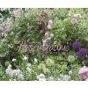 K209222//NÁSTĚNNÝ KALENDÁŘ růže, květiny, zahrady, SE SPIRÁLOU, MĚSÍČNÍ, MEZINÁRODNÍ KALENDÁRIUMÚ MNOŽSTEVNÍ SLEVY NA NÁKUP KALENDÁŘŮ/ ADONAI.cz