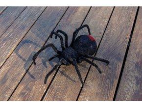 Rc pavúk, čierna vdova (5)