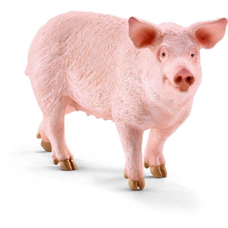 Krmiva pro prasata