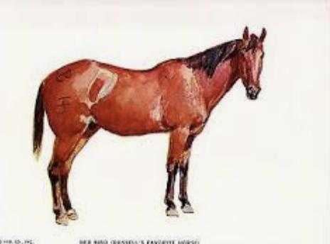 Pro staré koně