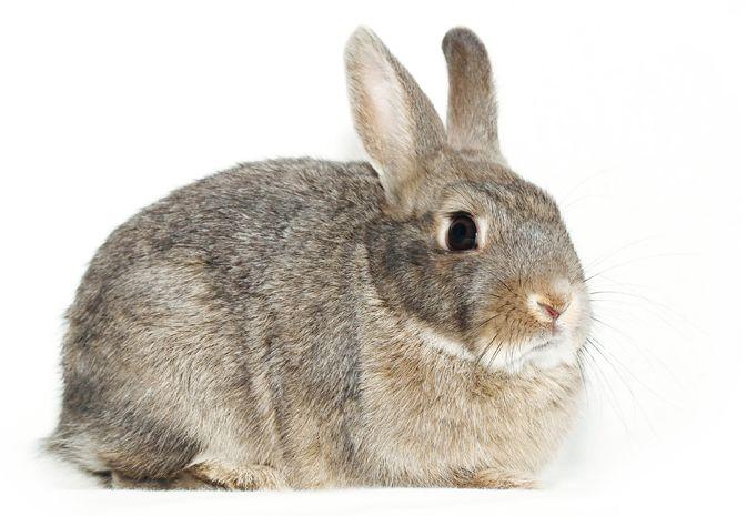 Krmiva pro králíky a hlodavce
