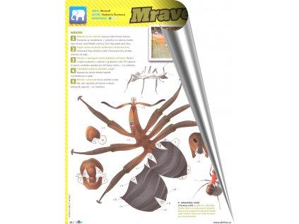 Mravenec