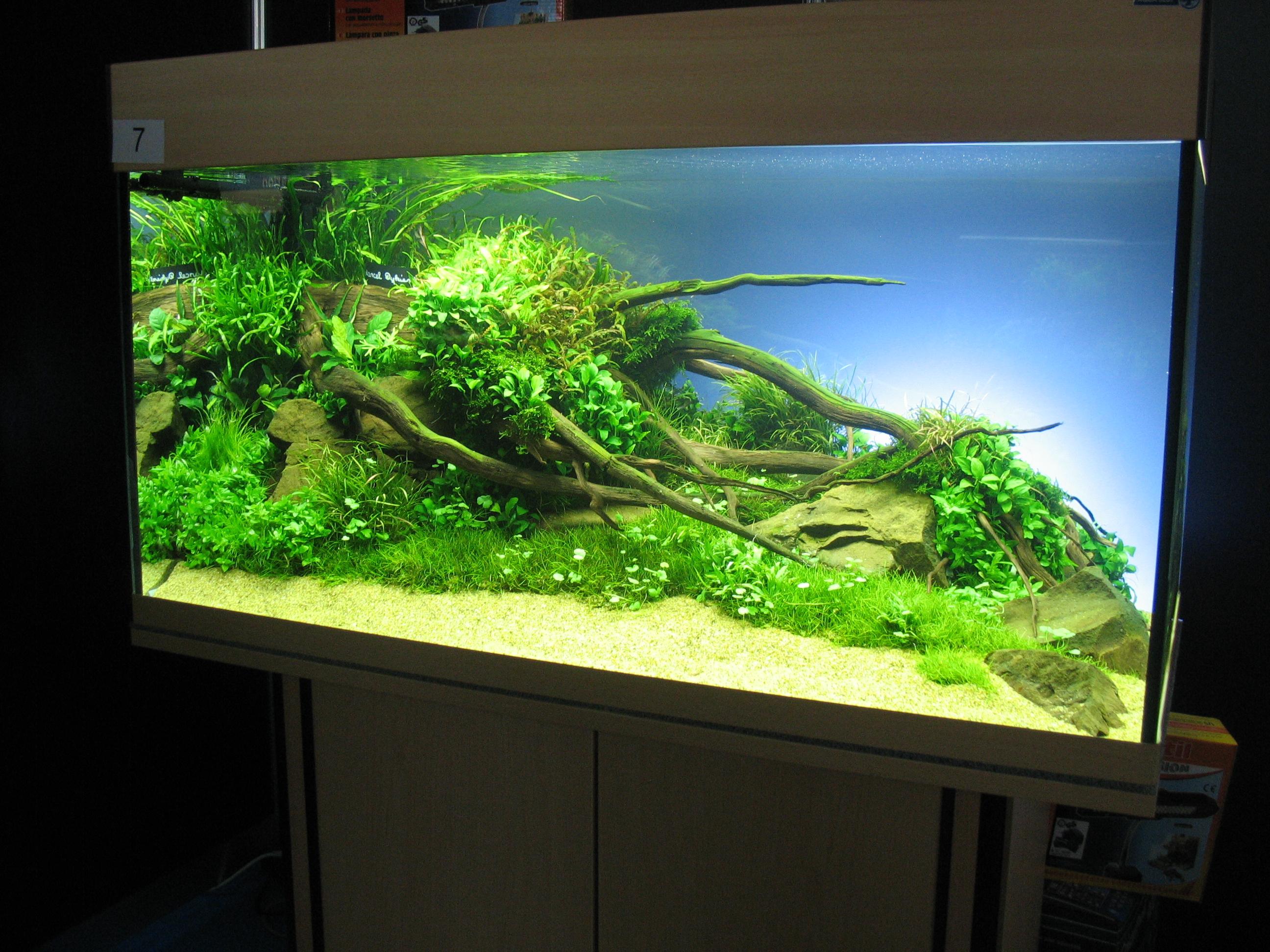 Jak založit krevetkárium - akvárium pro krevetky