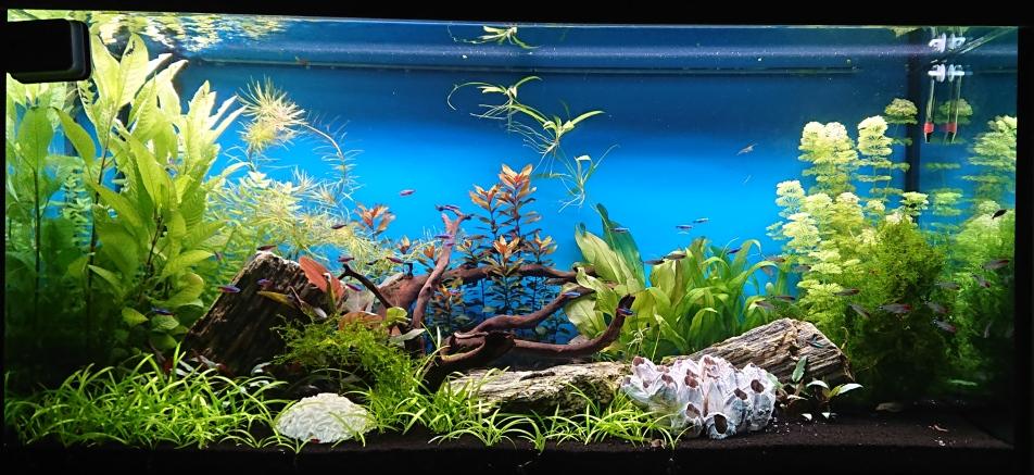 Spoločenské akvárium 360l