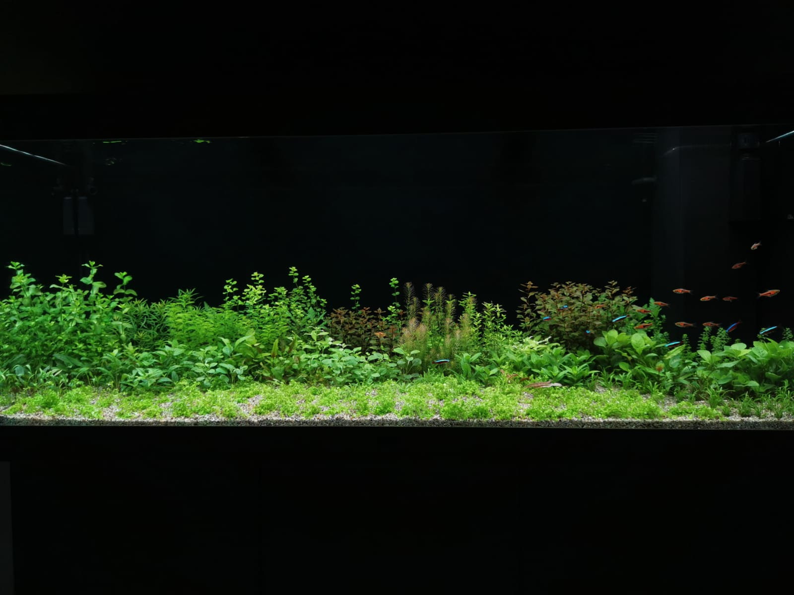 Juwel Rio LED 450 - rastlinné akvárium