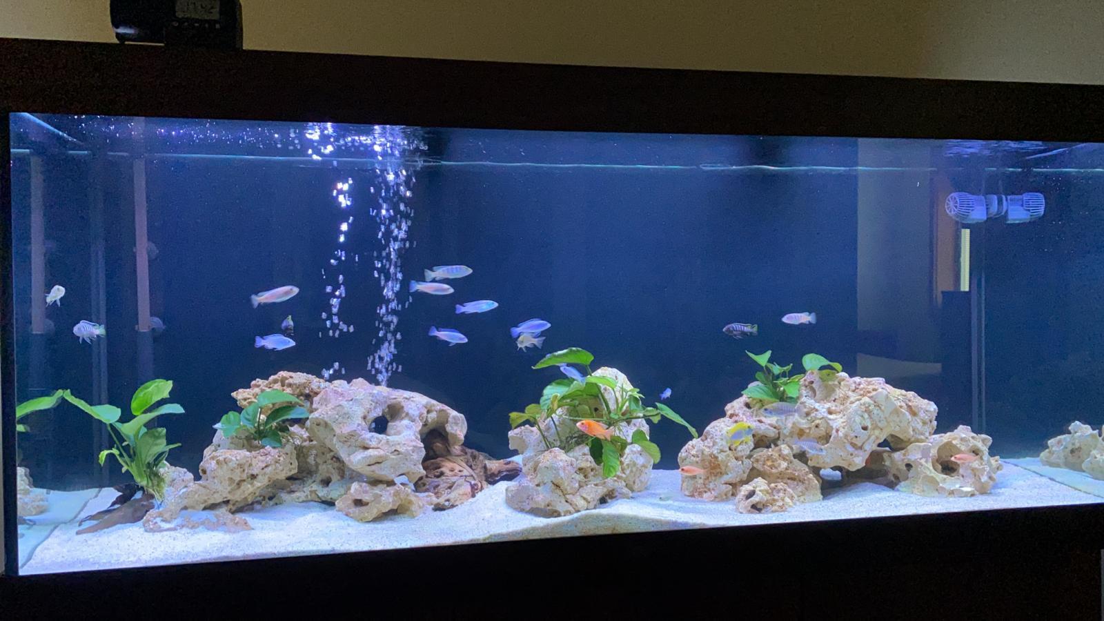 Juwel Rio LED 450 - akvárium Malawi
