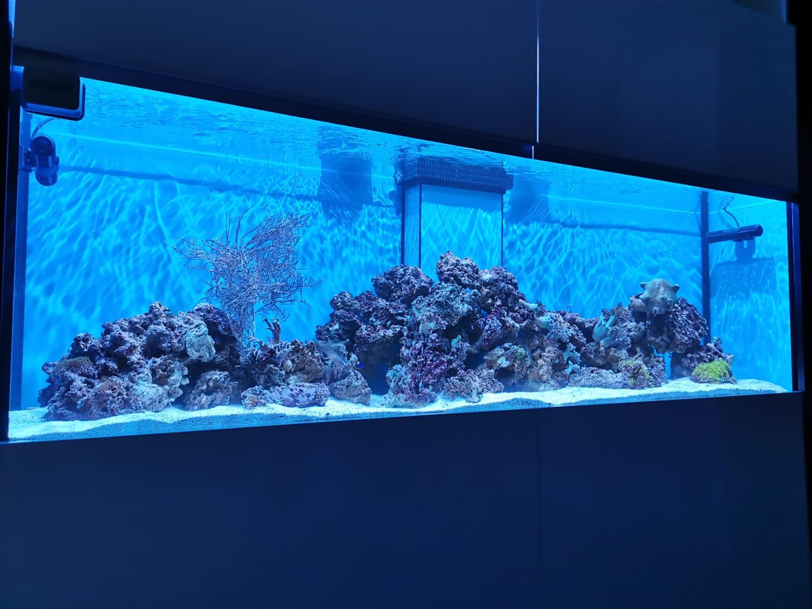 Morské akvárium 750l 205x55x66cm