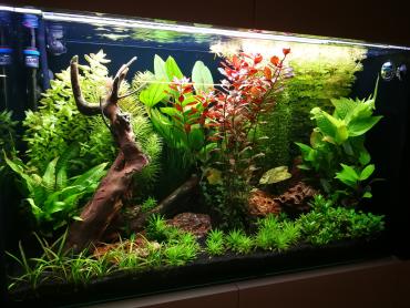 Rastlinné akvárium 270l