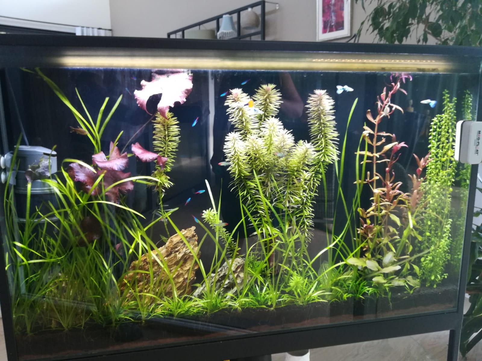 akvarium-hainburg