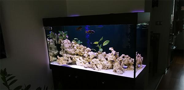 nove-malawi-akvarium-2