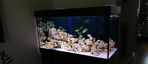 nove-malawi-akvarium
