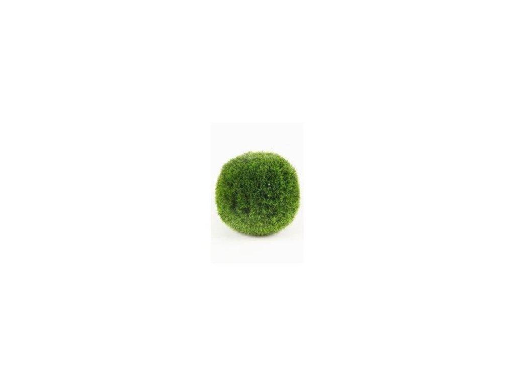 Chladoflora aegagropila 2-4 cm mini