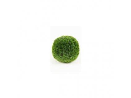 Cladophora aegagropila 2-4 cm mini  Riasogula