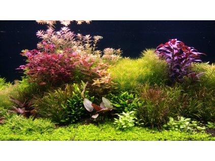 Pravidelný servis a údržba akvária