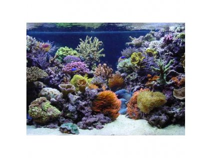 Akvárium na kľúč