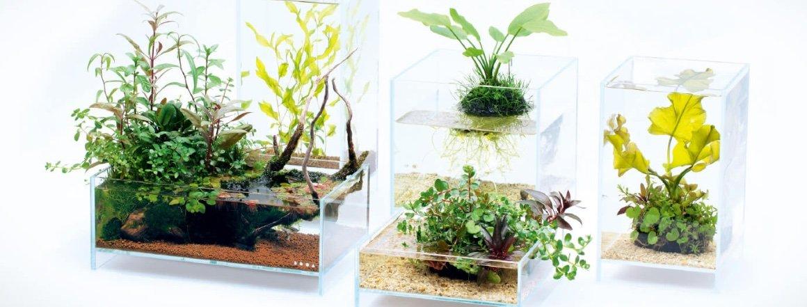 DOOA Neo Glass Air - jednoduchá akvária a paludária pro každého