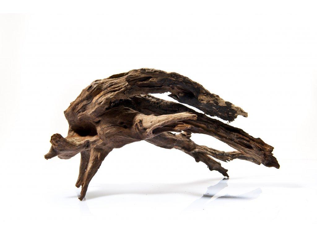 AV Congo Wood