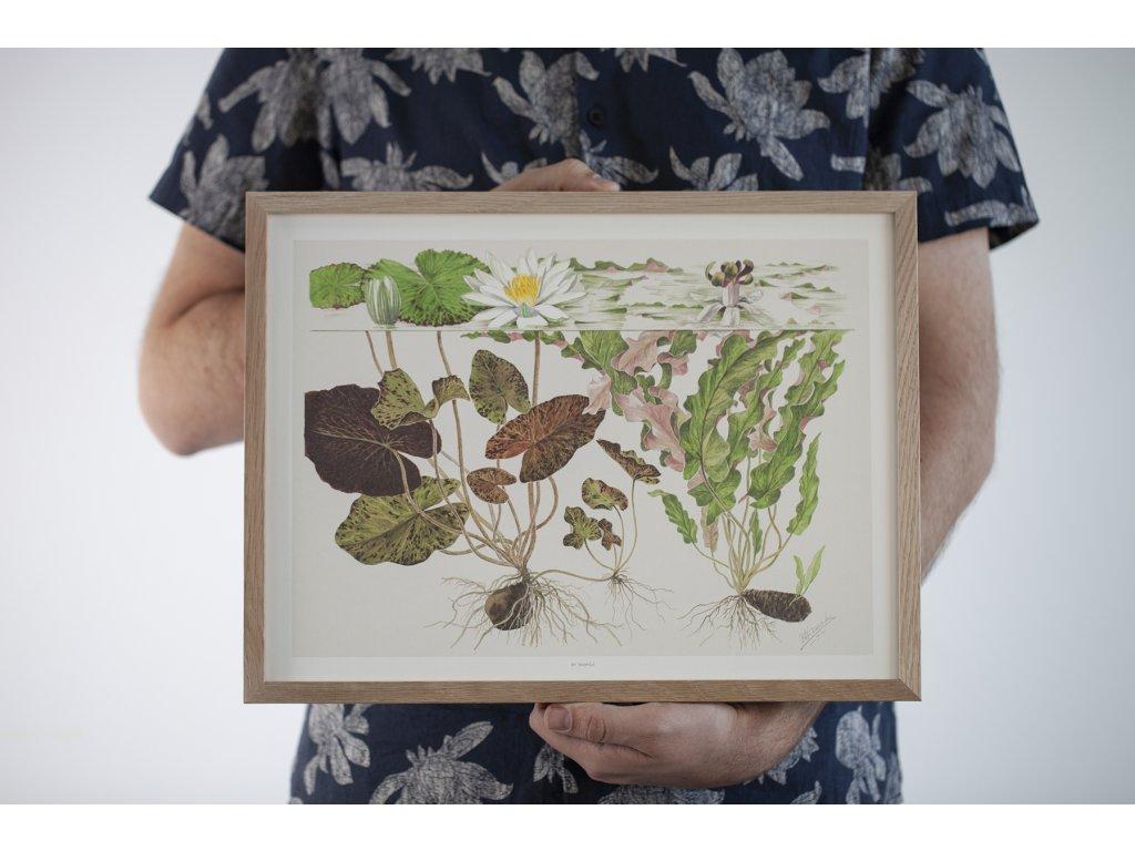 513 Tropica Art Poster 40x30 cm Nymphea